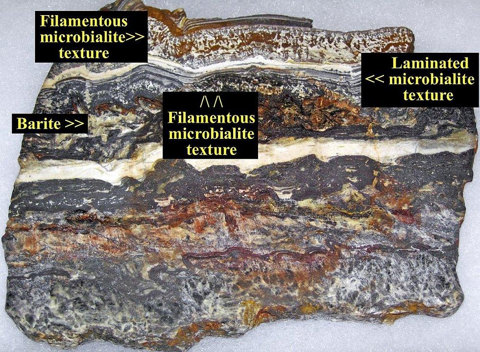 Jde o vzorek nejstaršího známého výskytu fosilií na planetě Zemi
