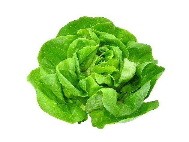 Zelenina - hlávkový salát