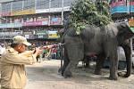 Divoký slon, který se pět hodin toulal v ulicích jednoho města na východě Indie, rozséval paniku a poničil stovku domů, obchodů i dalších budov a také několik aut.