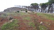 Gran Canaria. Pozůstatek lesa, přes který se před nedávnou dobou přehnal požár. Některé stromy požár přežily.