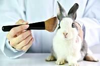 Pokusy na zvířatech - Ilustrační foto