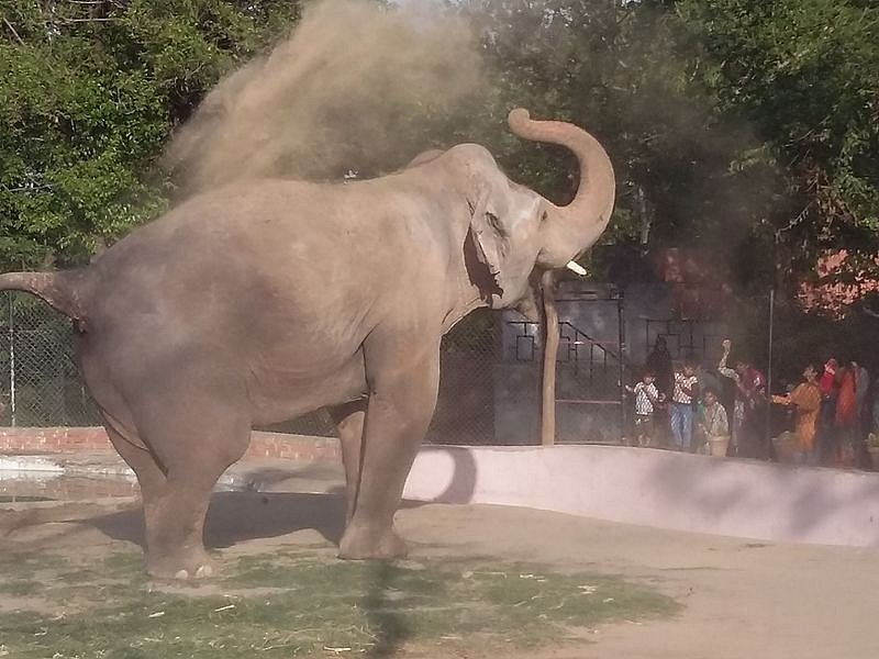 Slon v Marghazarské zoologické zahradě