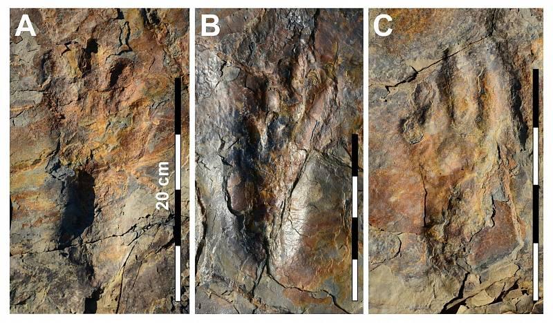 Fotografie dobře zachovaných otisků nohou druhu Batrachopus grandis