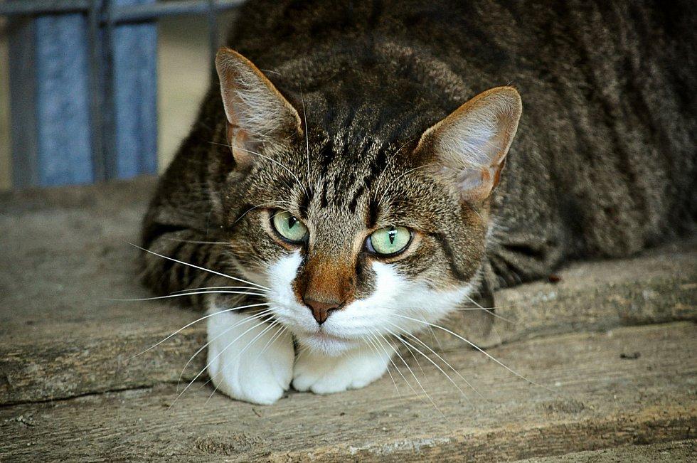 Kočka - Ilustrační foto