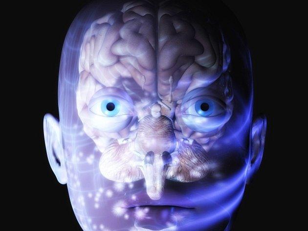 Lidský mozek. Ilustrační foto.