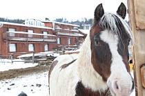 Strakatý kůň a v pozadí saloon. Scéna jako z kovbojky. Tedy až na ten sníh.