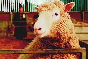 Slavná ovce Dolly předznamenala cestu ke klonování lidských embryí.