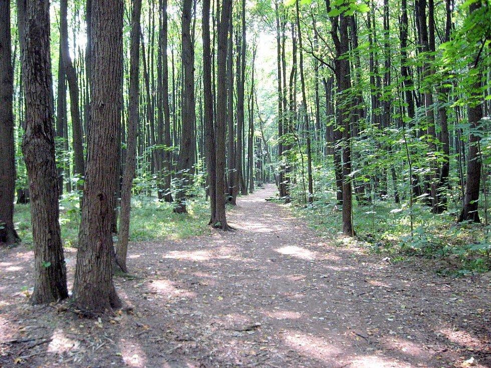 Bitcevskij park je druhý největší park na území Moskvy
