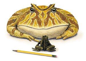 Největší žába jaká kdy skákala po světě vypadala přibližně takto.