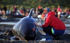 Velryby uvízlé na mělčině, ilustrační foto