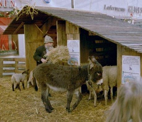 """Vánoční trhy v německém Esslingenu, jejichž součástí jsou """"jesličky"""" s živými zvířaty"""