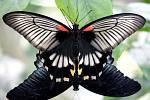 Motýlí láska.