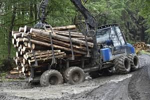 Odvoz dřeva napadeného kůrovcem - ilustrační foto