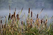 Podzimní ráno. Ilustrační foto
