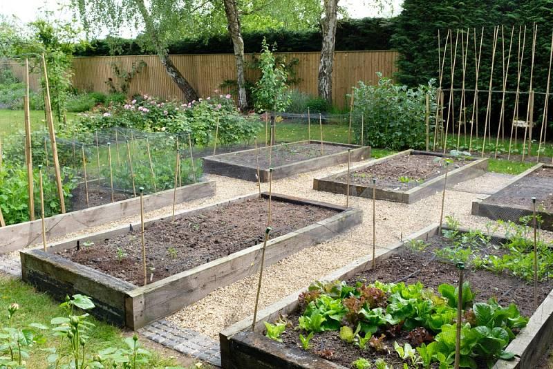 Jak velká by měla být užitková zahrada? Odborníci tvrdí, že čtyřčlenné rodině postačí užitková zahrada o ploše přibližně padesáti metrů čtverečních.