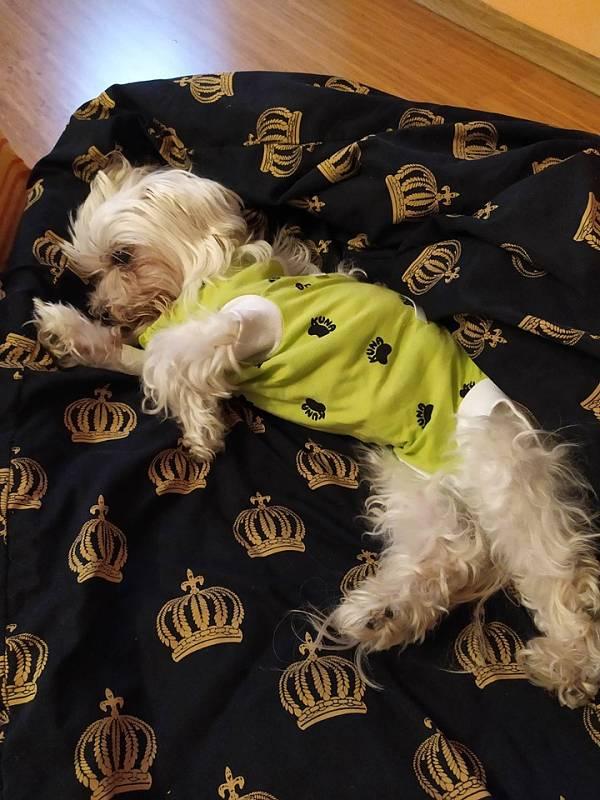 Moje malá královnička po operaci.