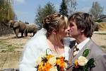Netradiční svatba v pavilonu slonů královédvorské ZOO