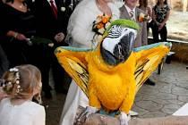 Snoubenci se nechali oddat v pavilonu Africká savana v zoo