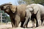 Africké slonice Umbu a Sally