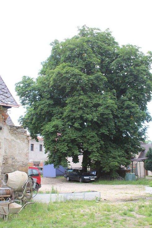 Levandulová farma manželů Adély a Josefa Heindorferových