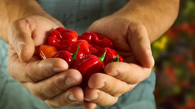 Pěstování paprik v domácích podmínkách