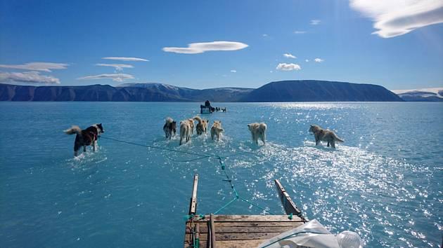 Psí spřežení brodící se vodou na tajícím mořském ledu v Grónsku