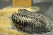 Zkamenělina trilobita, ilustrační foto