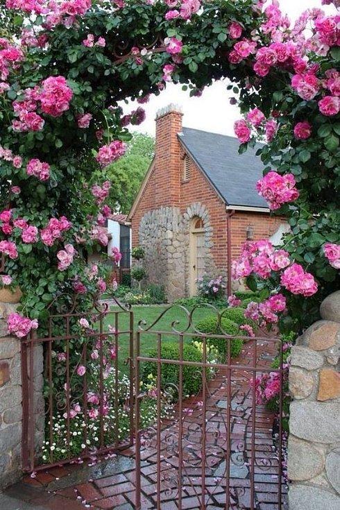 Růže v zahradě