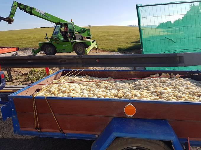Převoz kuřat na D1