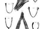 Náčrtky fragmentů londýnského exempláře Archeopteryxe a jejich srovnání s jinými zvířaty z původního díla Richarda Owena z roku 1862