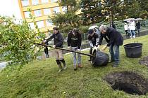 Do 600 dobrovolnických projektů se v příštích 72 hodinách zapojí více než 28.000 lidí po celém Česku. Práci dnes dopoledne zahájili vysazováním květin do záhonu v dolní části Václavského náměstí v Praze.