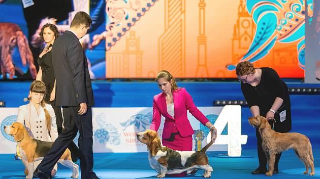 Jsou psi, kteří výstavy milují, libují si v potlesku a po skončení kariéry se jim stýská. Pro jiné je akce nepříjemnou záležitostí a na přání majitele se sice v povinném kruhu předvedou, ale chybí jim jiskra.