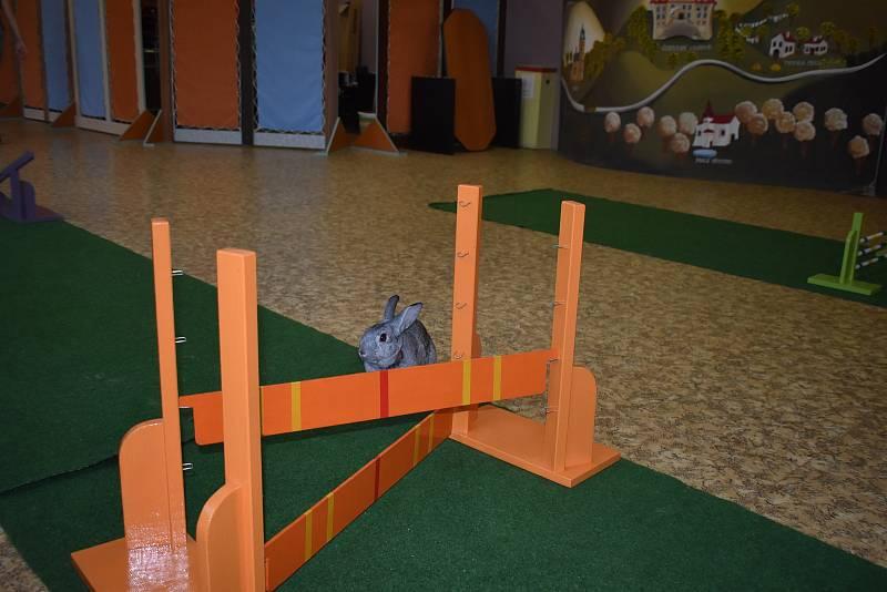 Skáče se do výšky nebo do dálky. Další disciplíny králičího hop jsou i parkur a rovinná dráha.