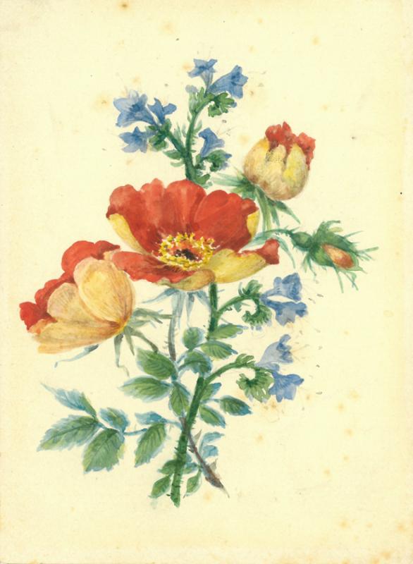 Vlčí růže