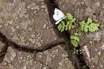 Rostlina ve vyschlé krajině, motýl, sucho. Ilustrační foto