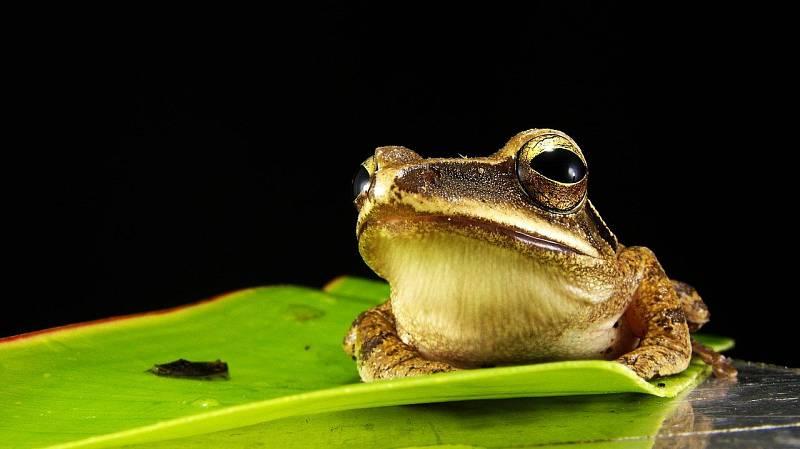 """Žáby se dokážou """"vypařit"""" ze svého rybníka i několik dní před katastrofou."""