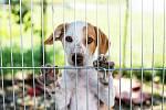 Pes v útulku - Ilustrační foto
