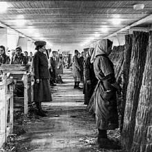 Ravensbrück byl ryze ženský tábor