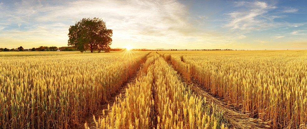 Zemědělci mají být víc na poli a vterénu, než aby vysedávali celé hodiny nad náročnou administrativou.
