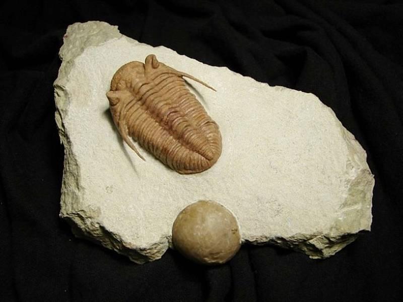 Jiří Vedral a fosilie z jeho nabídky