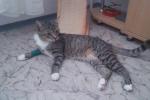 Třetí místo: Náš Kájínek po týdnu u paní doktorky v Doksech se zlomenou nohou.