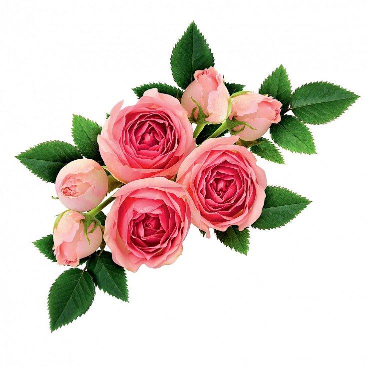 Pečující přípravky z růže působí i proti vráskám, jemně stahují póry a oživují tón pokožky.