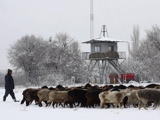 Místní obyvatel žene stádo ovcí u plotu letecké základny Manas v Kyrgyzstánu.