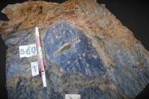 Britští archeologové objevili unikátní štít z doby železné