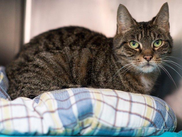 Jedna berlínská rodina získala o letošních Vánocích zpět svou kočku, která se jí před sedmi lety ztratila v ulicích německé metropole. Zmizelou černobílou kočku Miko v pátek našli obyvatelé ve čtvrti Keuzberg několik kilometrů od jejího domova.