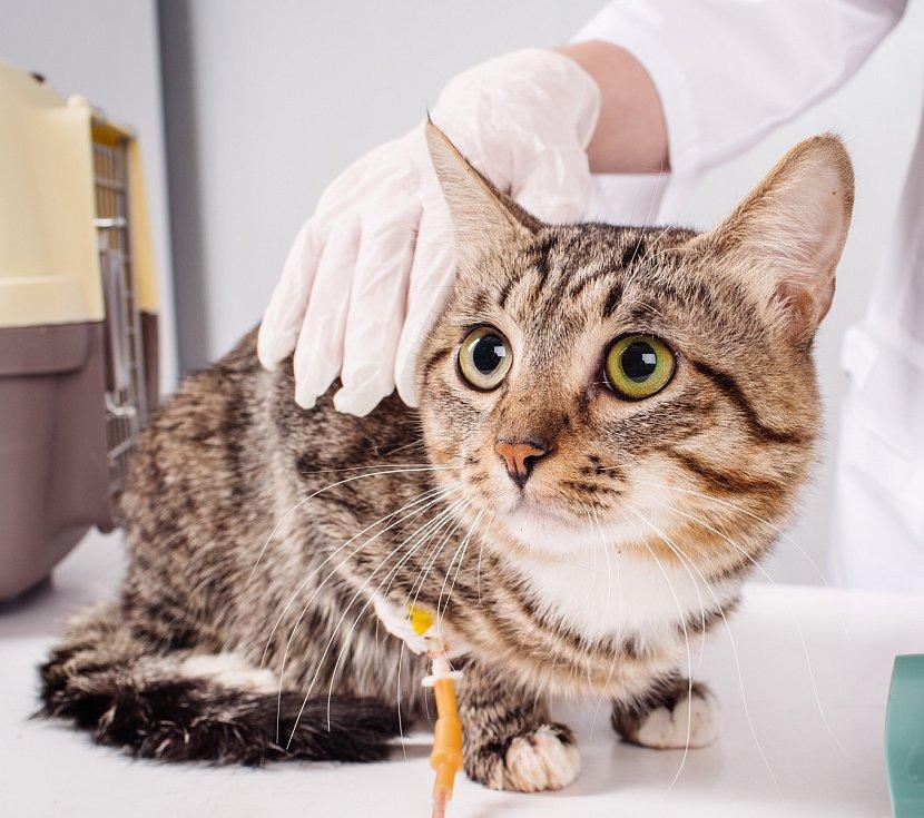 Kočka u veterináře.