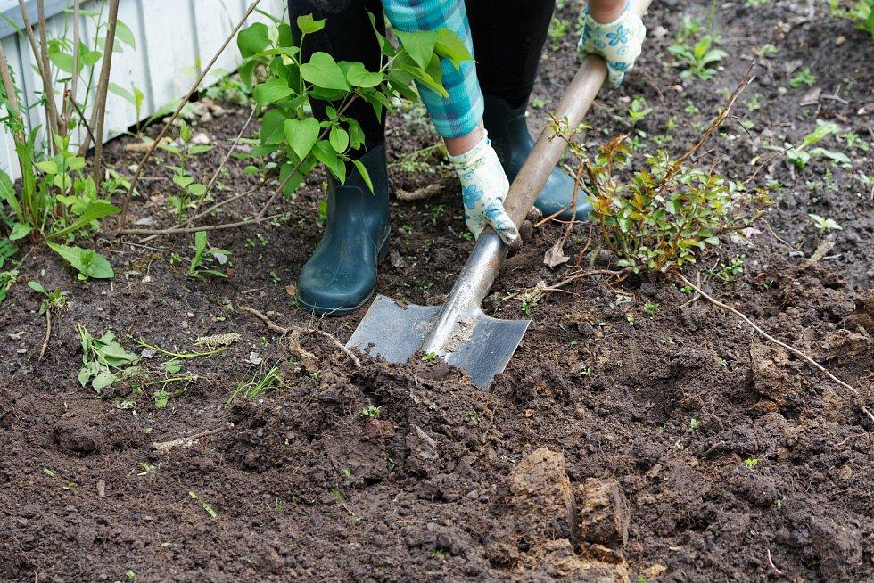 Porýt zahradu můžete až ve chvíli, kdy půda rozmrzne.