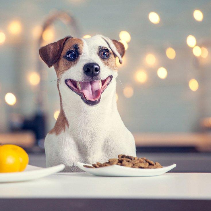 Mnoho mazlíčků se každoročně otráví jídlem. Ilustrační foto