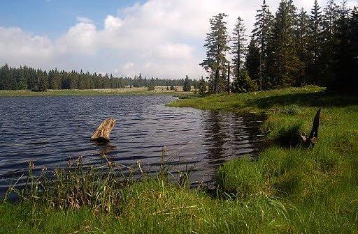 Naučná stezka Kladské rašeliny. Stezka seznamuje návštěvníky s přírodou Slavkovského lesa a historií osady Kladská.