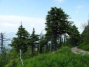 Přírodní rezervace Mazák